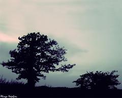 (alirezanajafian) Tags: forest iso100 wind jungle f25 longexposuretime abr 13sec