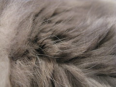 Harley's Fur by rfduck, on Flickr