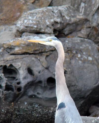 2008-06-08 Coal Island 006
