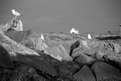 Manana Island Gulls (M. Waller) Tags: ocean lighthouse home fog clouds island bell maine newengland wyeth hopper monhegan manana