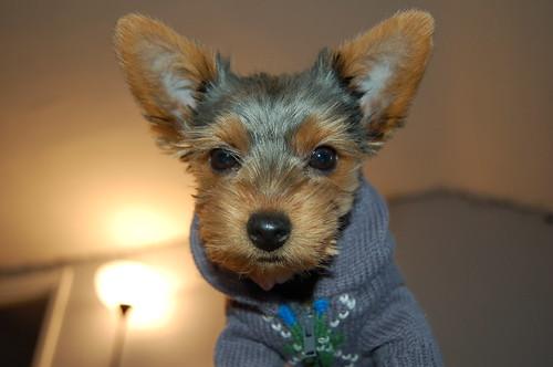"""""""Pixel"""" puppy"""