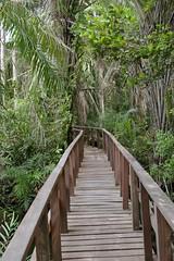 03-walkway (IrvineShort) Tags: conservation lagos nigeria lekki