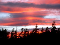 flaming clouds (2) (Szymek S.) Tags: trees sunset sky canada clouds britishcolumbia vancouverisland pacificocean tofino pacificnorthwest northwestcoast coxbay
