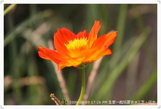 20080809三芝淡水全家遊 (10)