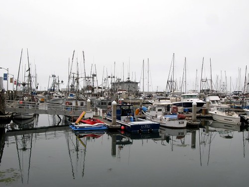 The fishing fleet at Pillar Point Harbor