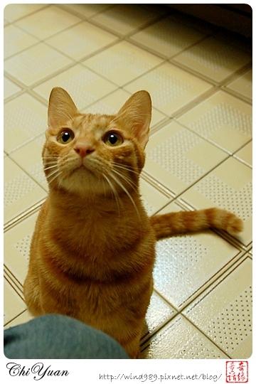【貓季】掀起糾紛的逗貓棒(DINO+橘子)