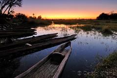 Okavango Delta, Botswana (davidkiene) Tags: africa sunset reed grass boat bush delta canoe safari swamp marsh botswana wilderness mokoro wetland okavango moremigamereserve okavangodelta weekendamerica platinumphoto anawesomeshot oddballscamp aplusphoto theunforgettablepictures tup2 qualitypixels allmemorieswelcome chiefisland