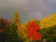 un raggio di sole prima del temporale (Libera Lu) Tags: cubism naturesfinest artisticexpression supershot abigfave colorphotoaward ysplix goldstaraward natureselegantshots