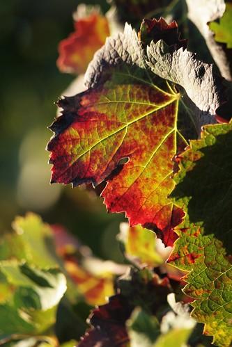 tons de outono sob o sol de verão