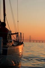 Sailing in sunset (adolfzen) Tags: sunset oresund oresundbridge hallbergrassy