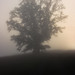 One Tree Foggy Hill by DemiArts