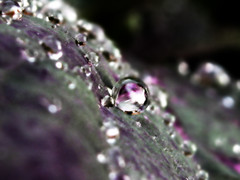 Quick Silver (curious_spider) Tags: rain dark droplets leaf weed purple mercury quicksilver dew vista silvery stark processed bruisecolored