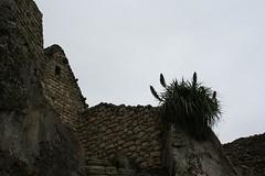 Machu Picchu 094