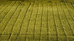 Lines In The Sand by farmerytwang