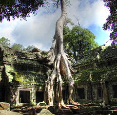 Ta Prohm, the Tomb Raider temple (MastaBaba) Tags: tree closeup clouds temple october cambodia roots bluesky angkorwat surface laracroft root angkor taprohm 2008 tombraider hdr greenmoss greybuilding 20081022 brownground othergreentrees plantsketch grayroot squarewindowcave