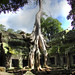 Ta Prohm, the Tomb Raider temple