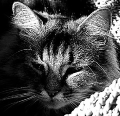 Solar Powered Nick II (mightyquinninwky) Tags: sunlight cute apt cat dof fuzzy bokeh kentucky nick lexingtonkentucky wicker distillery soe blackdiamond onblack fontaineroad nearcampus fayettecountykentucky centralkentucky viewonblack shieldofexcellence blackwhiteaward thebluegrassstate solobn alittlebeauty ~newenvyofflickr~ newenvy solarpowercats bestofformyspacestation