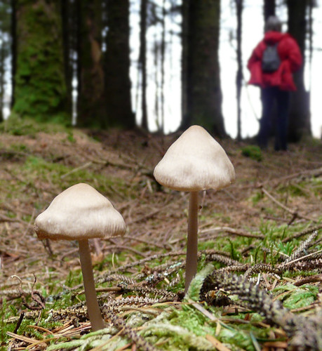 Ardentinny toadstools 05Nov08