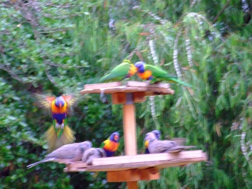 blurry birds 02