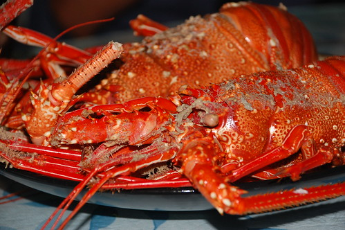 Lobster in Batanes