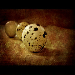 "Silence ~ ""Uttering a word is like breaking an egg"" (shastadaisy~) Tags: stilllife textures silence silencio quaileggs memoriesbook theawardtree passionateinspirations dragondaggerphoto utteringawordislikebreakinganegg magicunicornverybest magicunicornmasterpiece"