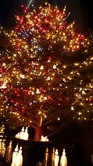 MIKIMOTO Janbo Tree