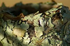 details of humminbird's nest