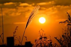 Sunset (DSLR_MANIA) Tags: eos flickr korea seoul southkorea classique ef200mmf28liiusm impressedbeauty canonef200mmf28liiusm eos1dmark3 canon1dmark3 dslrmania canon1deos1d flickrclassique