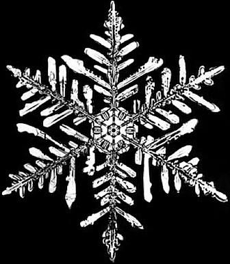 snowflake_400x461.shkl.jpg
