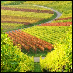 Take a Break from everyday Life in Nature ... Vineyard Fall Colors - Landscape in Germany (Batikart) Tags: autumn red orange plant color colour green rot fall nature leaves yellow canon germany season square landscape geotagged deutschland leaf vineyard interestingness vines flora europa europe wine earth herbst natur pflanze stripe foliage explore gelb greenery colourful geology grn patchwork curve blatt 2008 landschaft bltter farbe 500faves eyecandy indiansummer weinberg streifen canonpowershot a610 kurve geologie badenwrttemberg swabian farbenfroh beutelsbach canonpowershota610 herbstfrbung 100faves i500 200faves 150faves remstal viewonblack 300faves regionstuttgart colorphotoaward herbstfarbe 400faves superfaveme batikart remsmurrkreis