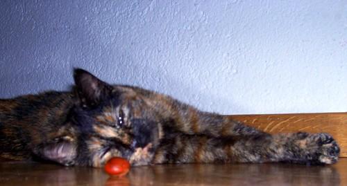 Emmie Cat