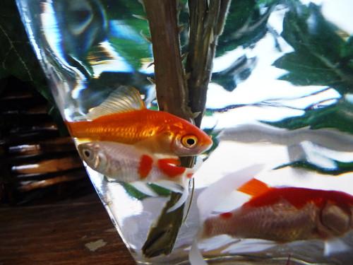 plastic flower fish 3