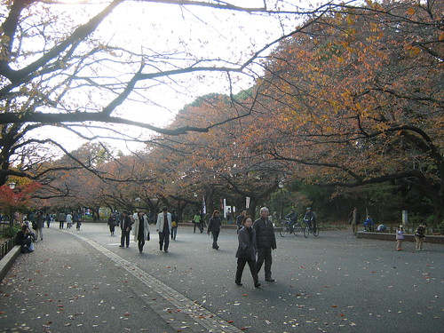 Autumn leaves at Ueno Park 2
