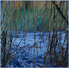 On ice (tine krogh) Tags: winter cold ice is vinter gimp kalt eis tine grafics naturesfinest krogh koldt