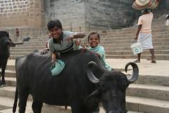 ガンジス河の河岸にて、水牛と遊ぶ少年たち。