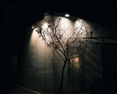 tree*'^+z (june1777) Tags: street light tree mamiya night fuji n 7 snap e 400 seoul pro f4 67 insadong 80mm 400h mamiya7 pro400h