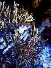 Vida sobre un tronco... (PaoLx) Tags: chile red patagonia tree forest lenga log rojo south fungi bosque rbol trunk sur tronco region liquen coyhaique austral nothofagus pumilio
