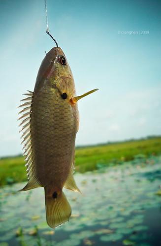 Kết quả hình ảnh cho cá cắn câu