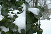(dhill4910) Tags: ohio cleveland lakeviewcemetery tych maxsdigi