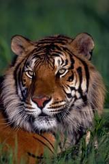 Animals Closeup