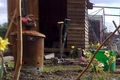 Allotment Shambles