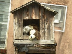Fenced in Fluffies Home (Just Another Amateur) Tags: abandoned animals trash boats toys stuffed garbage urbandecay abandonedtoys rundownbuildings abandonedboats abaondonedbuildings abaondedstuffedanimals detitrus