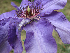 FLOWER 2 (Ost.Scuny) Tags: fiori viola umbria naturalmente