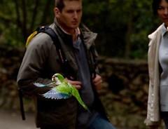 piccione verde (stefie66) Tags: barcelona spain parcguell barcellona spagna pappagallini allrightsreserved dsc5842 piccioniverdi stefaniaendrici