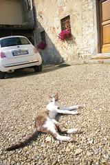 IMGP3755 (Podozoo) Tags: toscana castello filippo terreno j5 vigneto vigna agronomia   nipozzano     httpyousukohcom    yousukoh yousuk