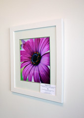 Framed Bright Daisy