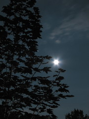Moonlit Leaves