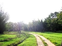 small way inside Bandipur forest (~~~~Karthik.S~~~~) Tags: india green forest way karnataka nationalgeographic bandipur oléquebonito
