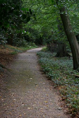 Darwin's walk