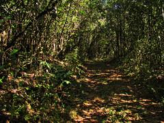 Way of the Butterflies - Wolf's Farm - Brazil ...